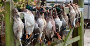 Background birds image